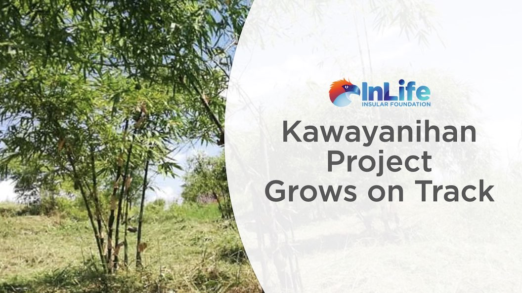 Insular Foundation's Kawayanihan Project Grows on Track